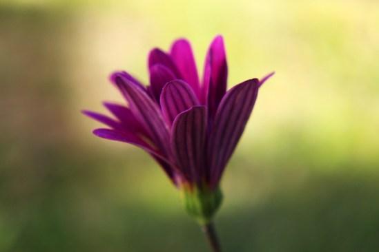 8.15.14.daisy.jpeg